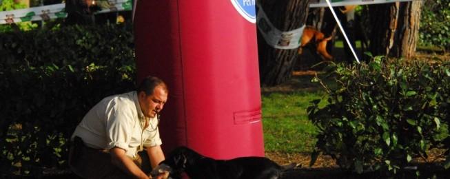 Educazione cani: lascia e dai