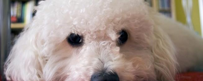 Come chiamo il mio cane?