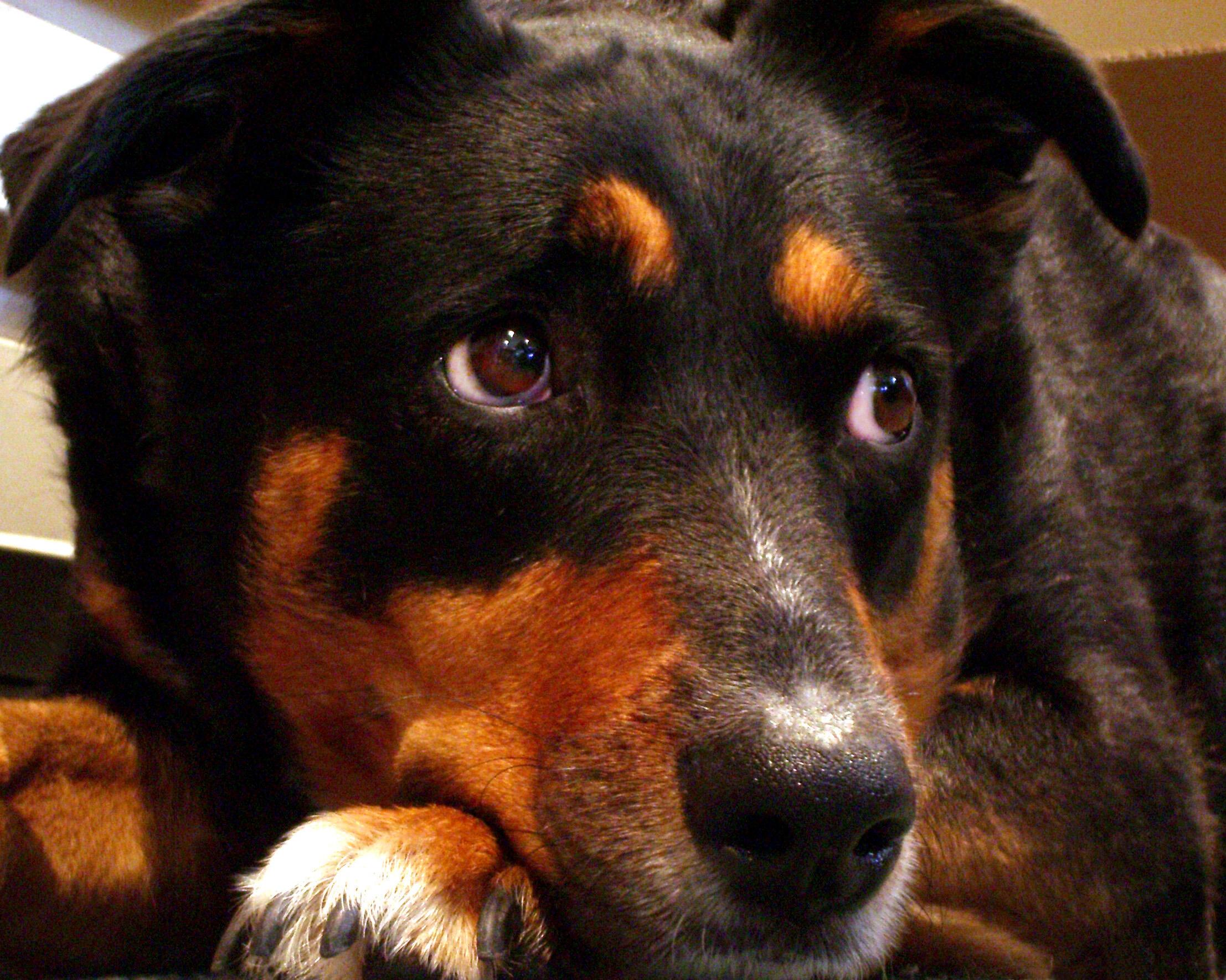 fear-dog
